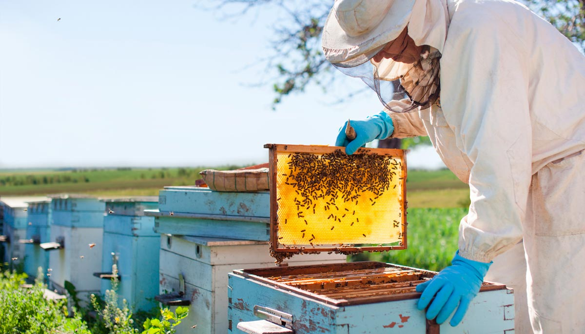 Tour of local produce - Honey